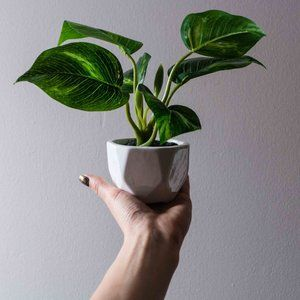 Artificial Pothos Plant in geometric container
